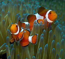Nemo by M.M.S.W. Botman