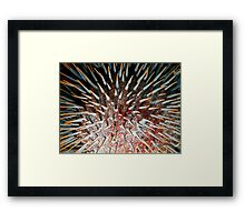 Crown of Thorns Starfish (Close-up) Framed Print