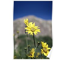 Wildflowers in front of mountains Poster