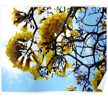 Hello Spring Poster