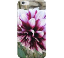 White and red Dahlia  iPhone Case/Skin