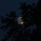 Glimpse of a super moon by missmoneypenny