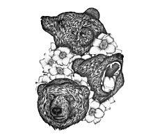 Bears in Bears Photographic Print