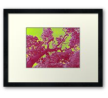 Nature Prints IIII Framed Print
