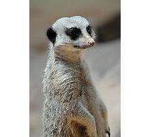 Meerkat On Guard Photographic Print