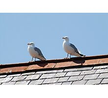 Rooftop seagulls Photographic Print