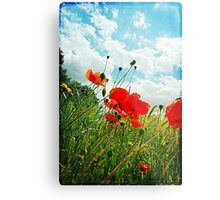 Norfolk Poppies .. Metal Print