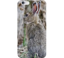 Wild Hare Alberta iPhone Case/Skin
