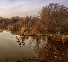 Pond Off the Berm by Lindarich