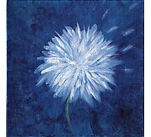 Dandelion in the wind Photographic Print