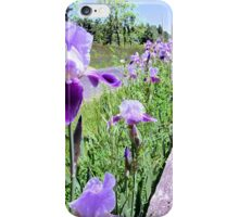 Purple Iris and Fence iPhone Case/Skin