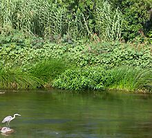 Urban Wildlife Habitat - Los Angeles River by Ram Vasudev