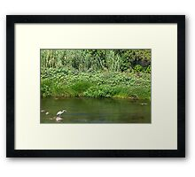 Urban Wildlife Habitat - Los Angeles River Framed Print