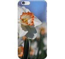 Daffodil II iPhone Case/Skin