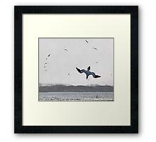 Gannet Diving Framed Print