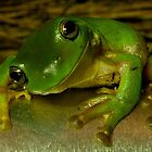 Smiling Green Tree Frog  by aussiejase