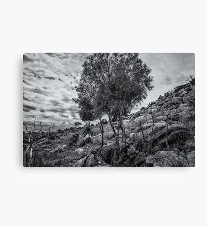 Monochrome Tree Canvas Print