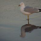 seagull on beach by Jacker