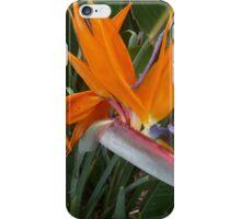Hawaiian Bird of Paradise Flower Print iPhone Case/Skin