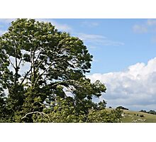 Tree in the countryside Photographic Print