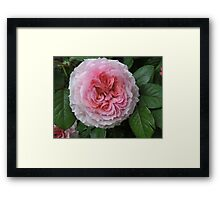 Gently Crumpled Framed Print