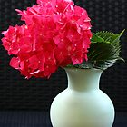Hortensia in a Vase by karina5