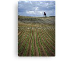 Stripe field Canvas Print