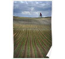 Stripe field Poster