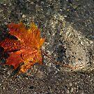 Maple Leaf - Playful Sunlight Patterns by Georgia Mizuleva