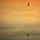 Evening Flight by Alex Boros