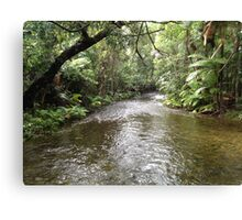 Darwin Australia Rainforest River Canvas Print