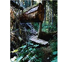 Fallen Giant Photographic Print