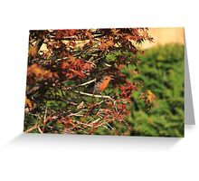 Robin hiding in Acer palmatum Greeting Card
