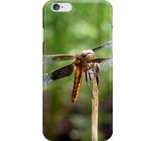 Not So Elusive Dragon iPhone Case/Skin