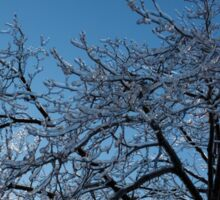 Ice Storm 2013 - Brilliant, Icy Blue Tree Branches Sticker