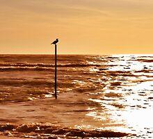 Sky and sea by JoAnnFineArt
