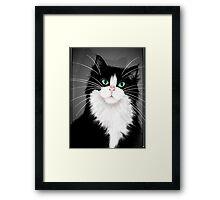 TUX-Tuxedo cats rock Framed Print