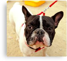 French Bulldog on a Leash - Prints, Cases, Pillows and More Canvas Print