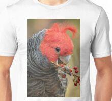 Male Gang Gang Eating Berries.  Unisex T-Shirt