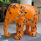 Elephant by Keith Larby