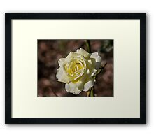 Do not tell the Yellow Rose it's Winter.....  Framed Print