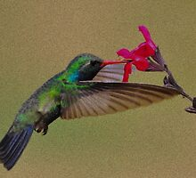 Hummingbird Sipping from Flower by PunkyandPiggy