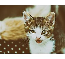 Baby Kitten Meow Portrait Photographic Print