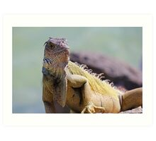 Young Adult Green Iguana Art Print