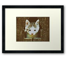 Small Baby Kitty Cat Portrait Framed Print
