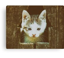 Small Baby Kitty Cat Portrait Canvas Print