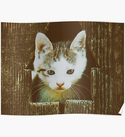 Small Baby Kitty Cat Portrait Poster