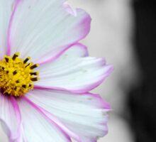 Gorgeous Flower Colour Splash Sticker