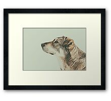Homeless Dog Looking Up Portrait Framed Print