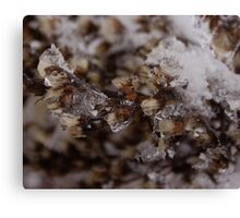 Snow Crystals Captures Ghost Canvas Print